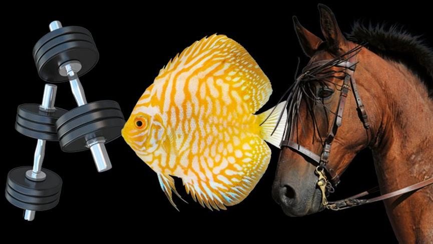 Bedelli'den satılık at,balık ve dumbell