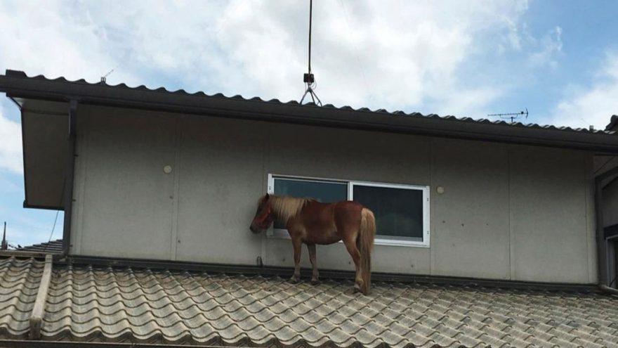 Japonya'da gören şaşkına döndü: Çatıda at