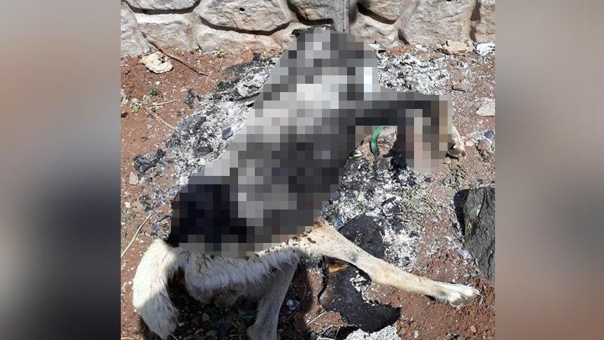 Diyarbakır'da bir köpek yakılarak feci şekilde öldürüldü