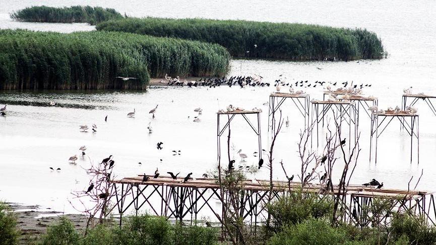Manyas Kuş Cenneti'nde göçe hazırlık