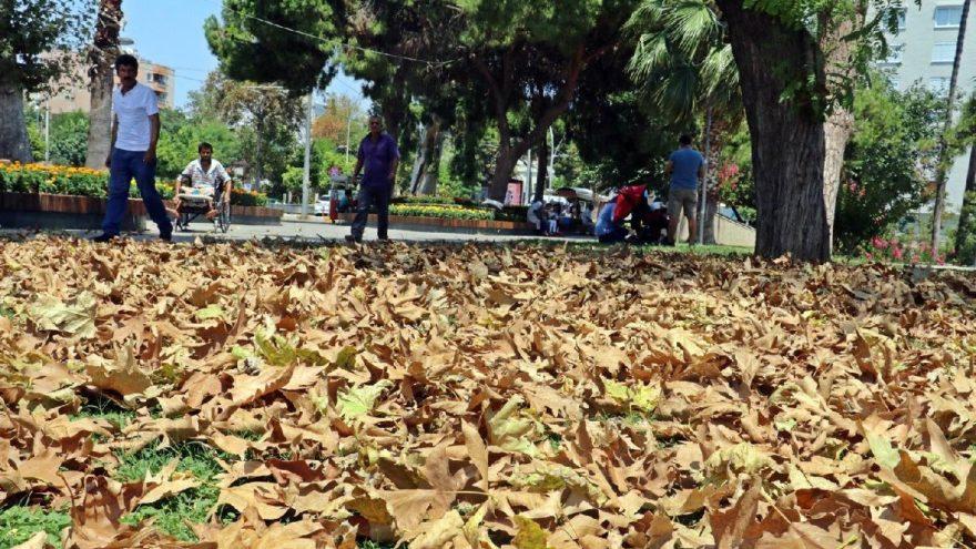 Antalya'da aşırı sıcakla gelen sonbahar