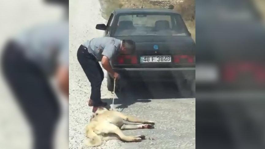 Görüntüler sosyal medyayı ayağa kaldırdı... Köpeğe inanılmaz işkence!