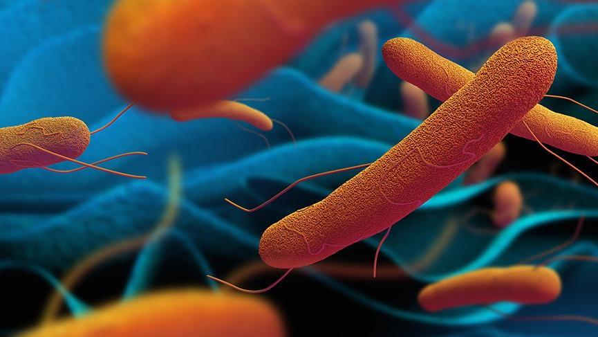 Tifo nedir? Tifo hastalığının nedenleri, belirtileri ve tedavisi