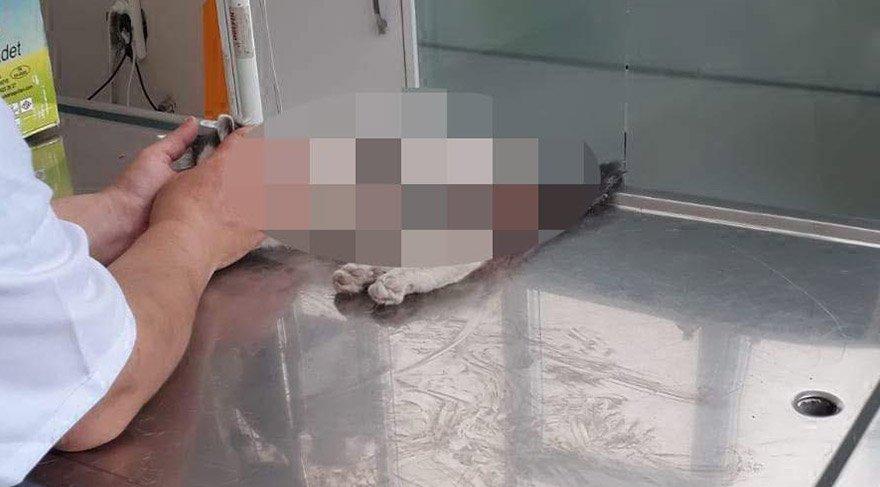 kediye-tecavuz-dha-1