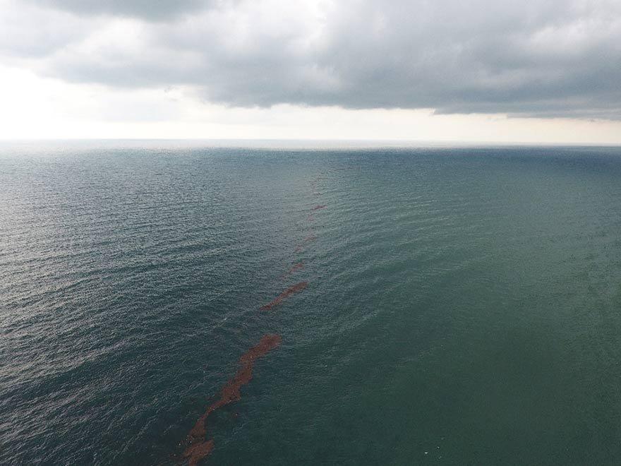 FOTO: İHA- Sel ile birlikte denize akan ağaç parçaları, fındık ve diğer cisimler adeta Karadeniz'i ikiye böldü.