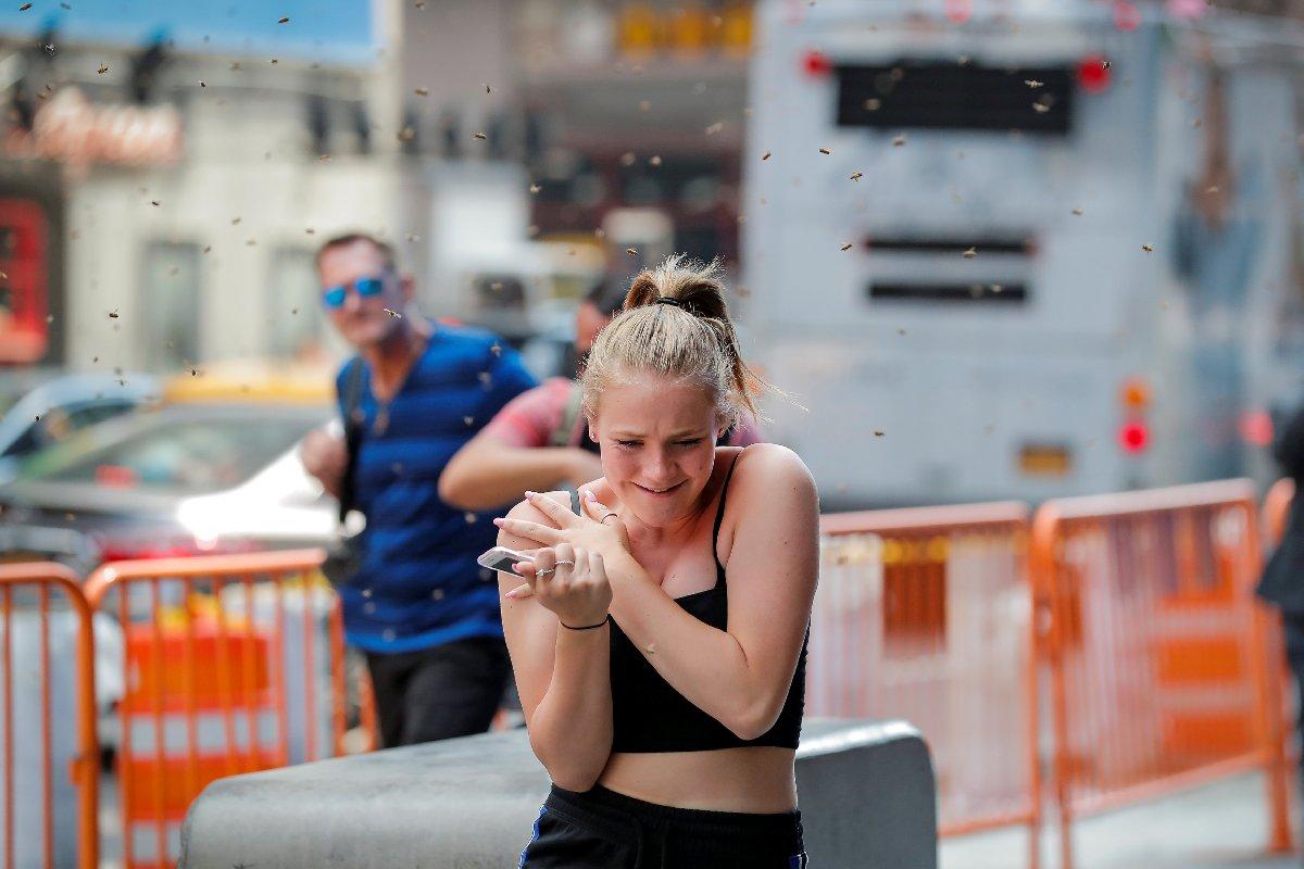 New York'ta spor yapanlar arıların saldırısına uğradı.