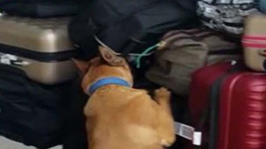 Atatürk Havalimanı'nda Kolombiyalı iki yolcu 16.5 kilo kokainle yakalandı