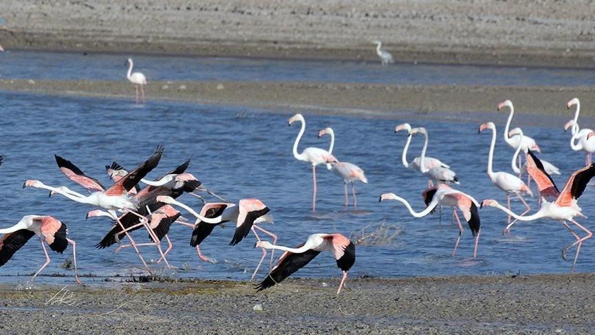 Kuşların yeni adresi: Yozgat'ın sulak alanları