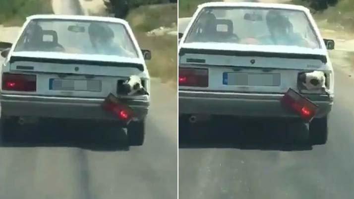 Kurbanlık koyun bagajda böyle taşındı