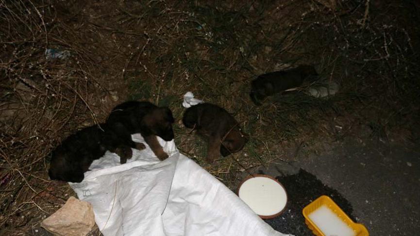 Yavru köpekleri çuvala koyup ölüme terk ettiler