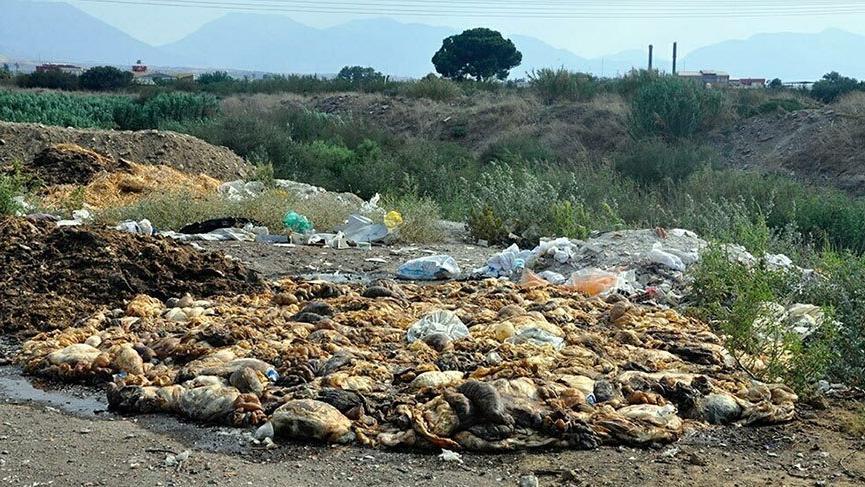 Manisa'da kesilen kurbanların atıkları çevreye bırakıldı!