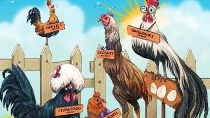 Tavuklar ve yumurtaları sergisi açılıyor