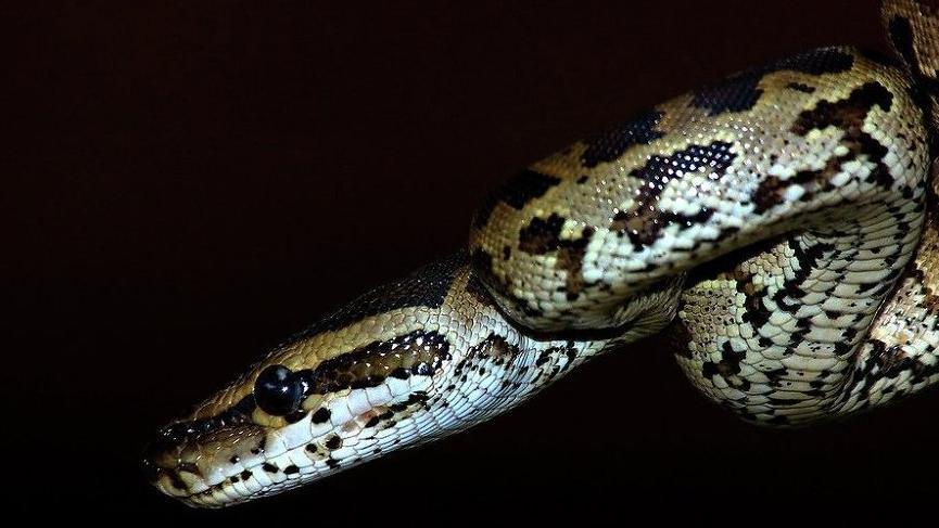 Kaybolan yılanlar, dev kütüphaneyi istila etti