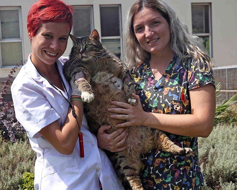 19.2 kiloya ulaşan kedi tedavi altına alındı