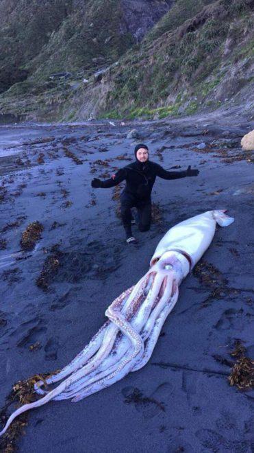 Alpin kardeşler balığı kıyıya vurmuş halde buldu.