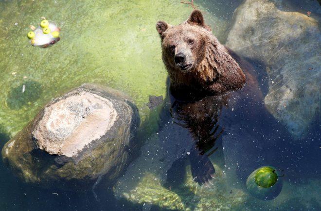 Roma'da hayvanat bahçesindeki hayvanlar da sıcaktan etkilendi.