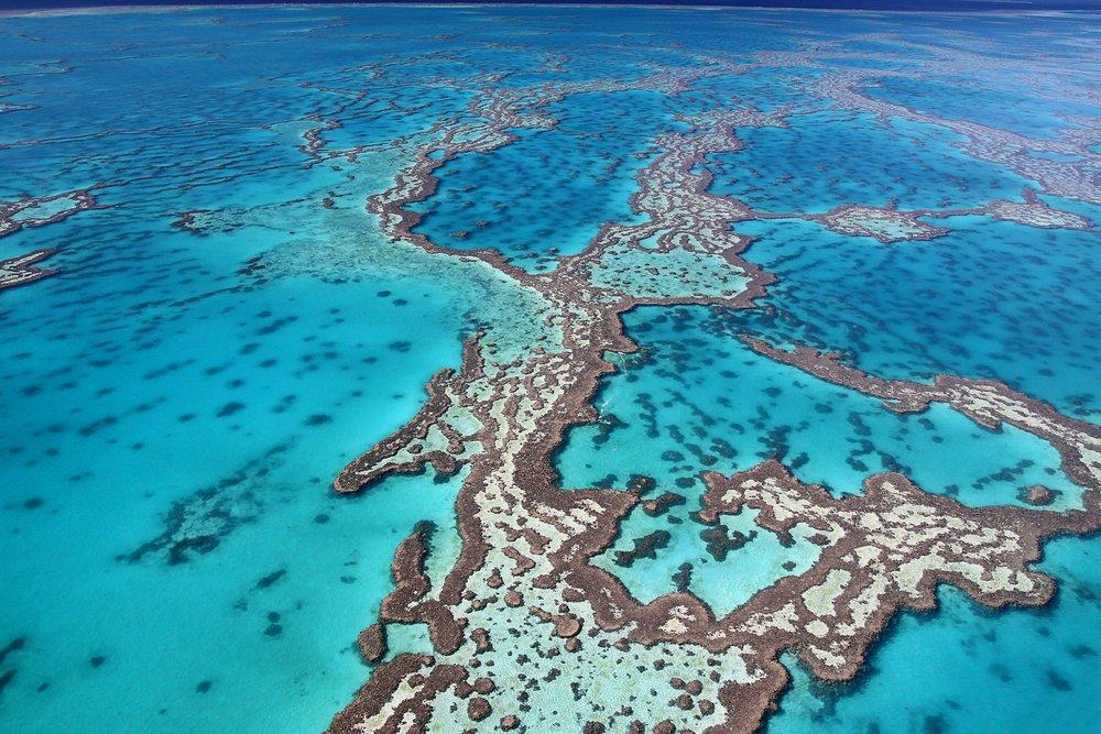 Büyük Set Resifi - Foto: Shutterstock
