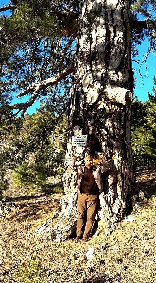 Kesilen ağaçlardan birinin eski hali. Foto: DHA