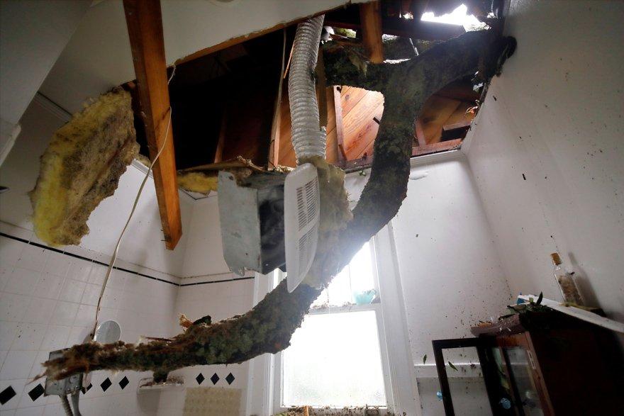 Rüzgarın şiddetiyle devrilen ağaçlar tehlike saçıyor. Reuters
