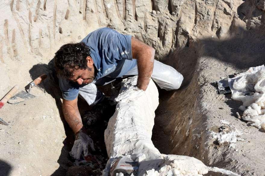 7.5 milyon yıllık fosil 'alçı ceket' adı verilen yöntemle koruma altına alındı. Foto: AA