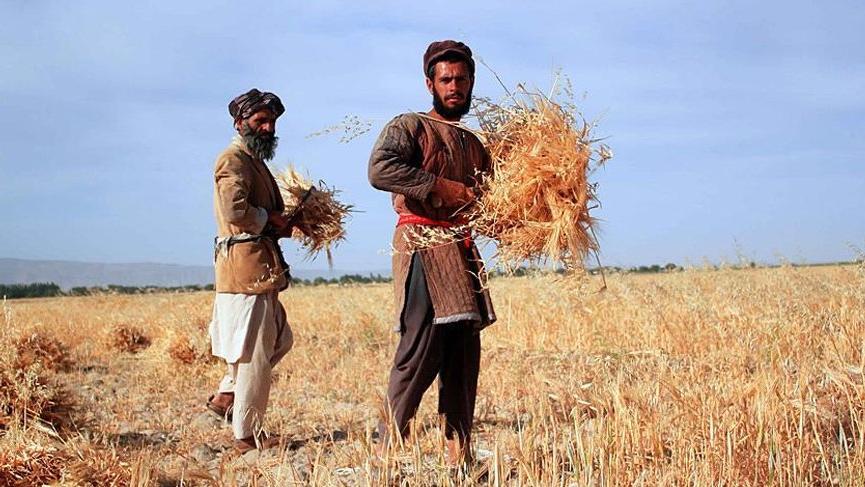 Gıda ve Tarım Örgütü 39 ülkenin açlıkla boğuştuğunu açıkladı
