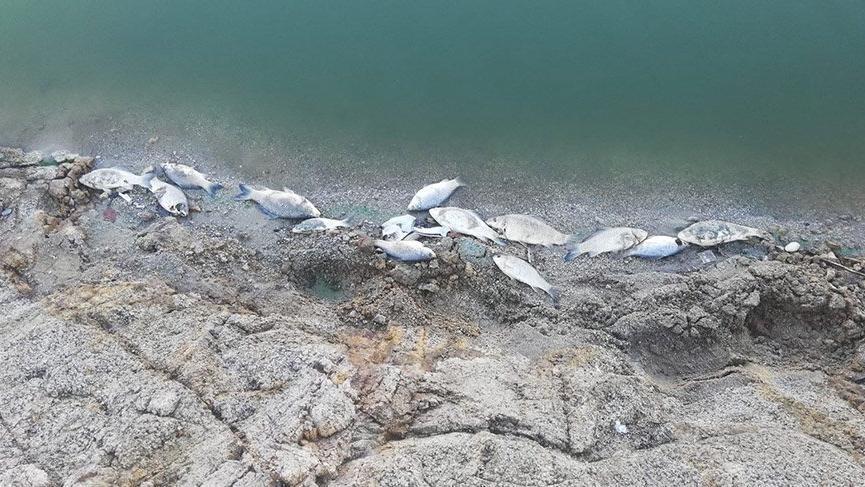 Büyükorhan'da toplu balık ölümleri korkutuyor