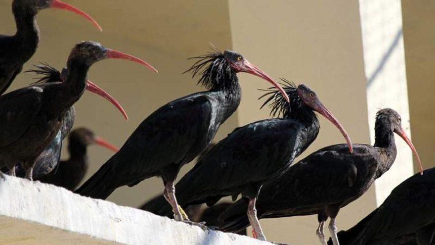 Birecik ilçesi nerede? Hadi ipucu sorusu: Kelaynak kuşları ile ünlü olan Birecik hangi ile bağlı?