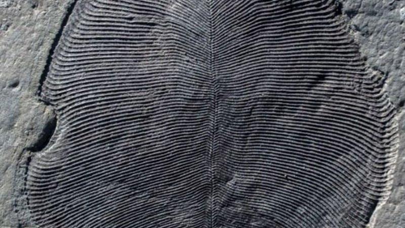 Tarihi değiştirecek buluş… 558 milyon yıllık sır çözüldü