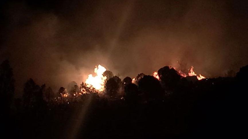 SON DAKİKA... İzmir'de orman yangını