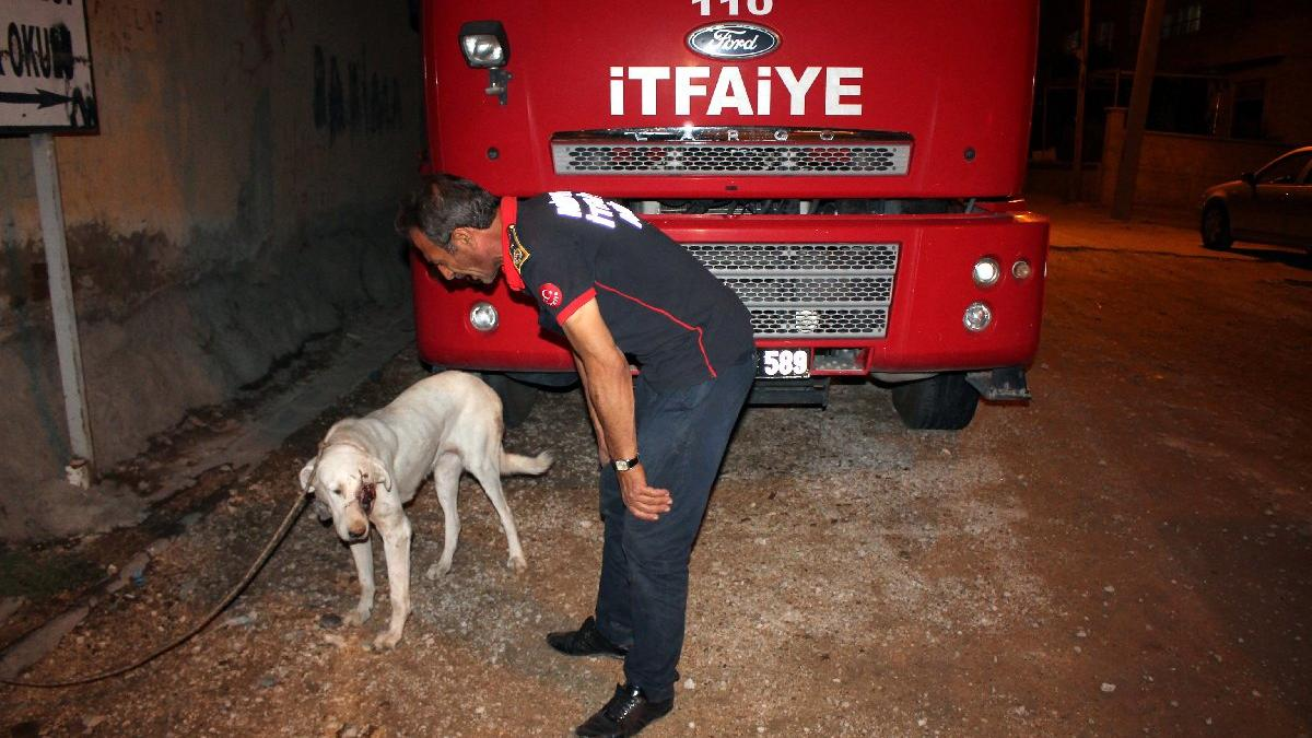 Midyat'ta gözü oyulmuş köpek bulundu