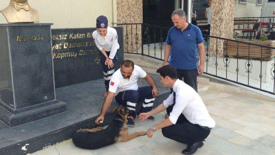 Yaralı köpek 112'ye gidip yardım istedi