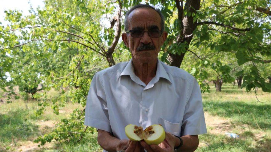 Akdeniz sineği hastalığı Niğde'ye sıçradı