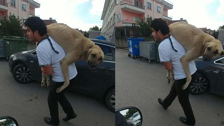 Hasta köpeği tedavi ettirmek için 500 metre sırtında taşıdı