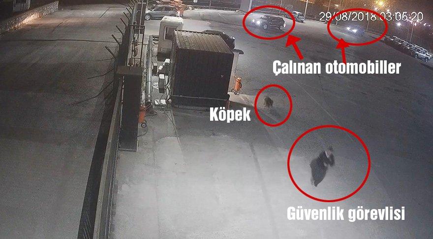 Araçlar çalınırken güvenlik görevlisi ve köpeği olay yerinden kaçıyor. Foto: DHA