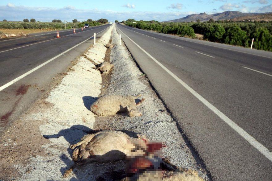 Kazada 65 koyun telef olmuştu. DHA