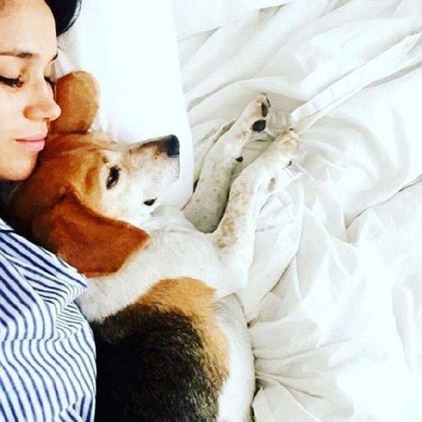 Meghan Markle'ın evlenmeden önce 2 köpeği vardı.