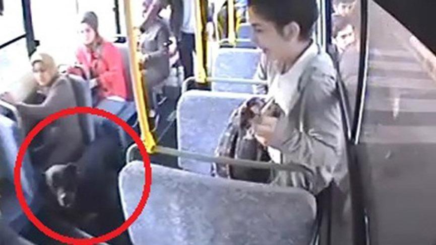 Halk otobüsüne giren köpek ortalığı karıştırdı!
