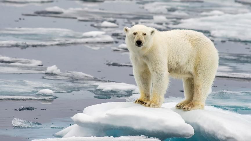 1,5 °C Küresel Isınma Özel Raporu açıklandı: Hala bir şansımız var