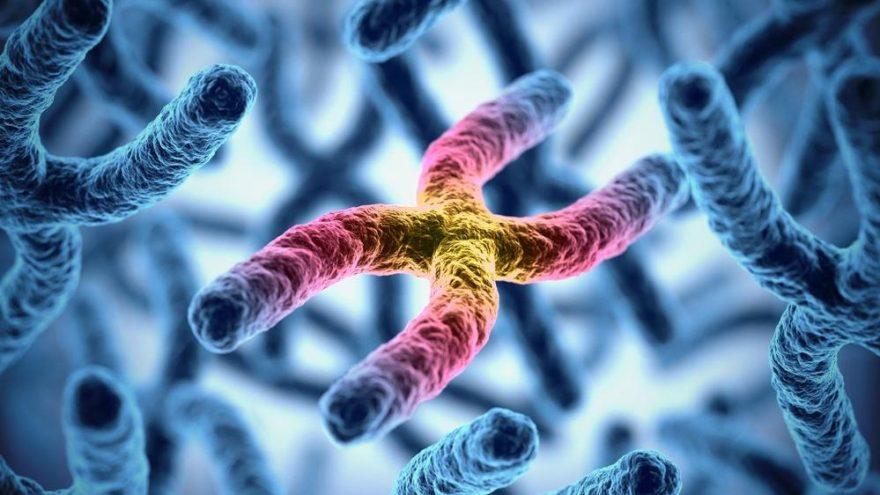 Telomer boyundaki değişimler kanser açısından gösterge olabilir