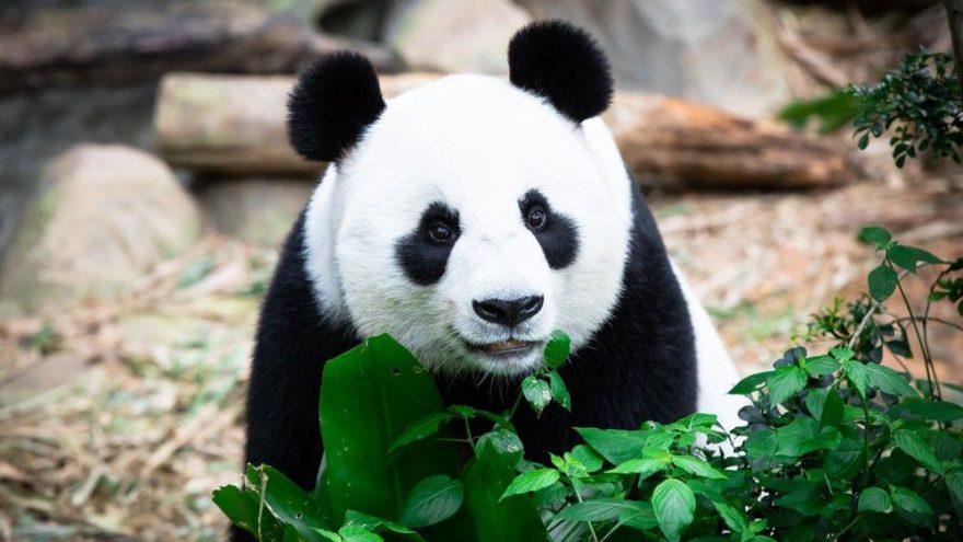 'İnsanlık, 44 yılda hayvanların yüzde 60'ını yok etti'
