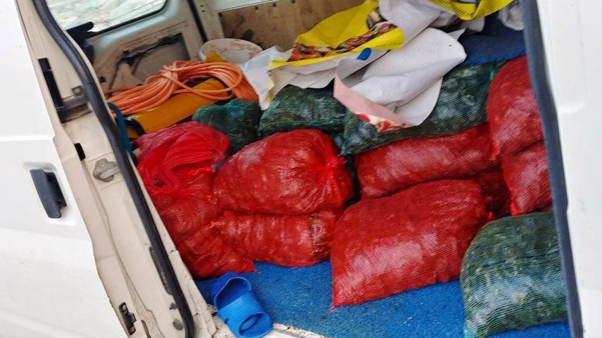 İstanbul'da midye operasyonu! Yüzlerce kilo ele geçirildi