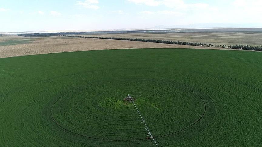 Hazine'nin tarım arazisine 23 bin başvuru
