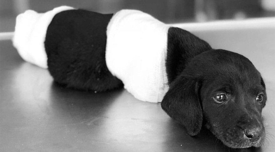 2018 Haziran ayında Sakarya'nın Sapanca ilçesinde ayakları kesilen yavru köpek gördüğü işkenceye dayanamayarak hayatını kaybetmişti.