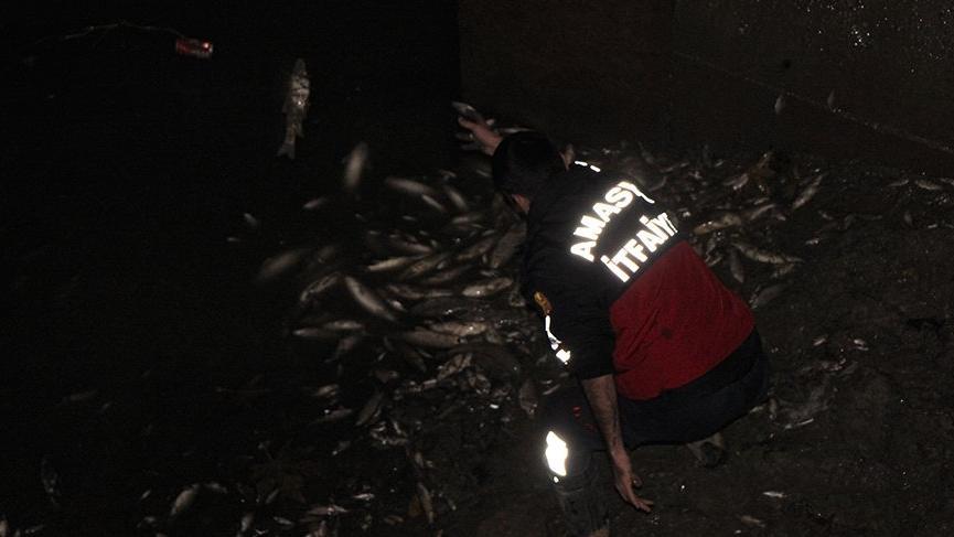 Balıklar kıyıya vurdu! Polis 'zehirli olabilir' diye uyardı