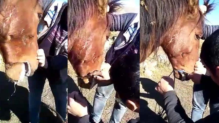 Yılkı atın ağzını iple bağlayıp ölüme terk ettiler