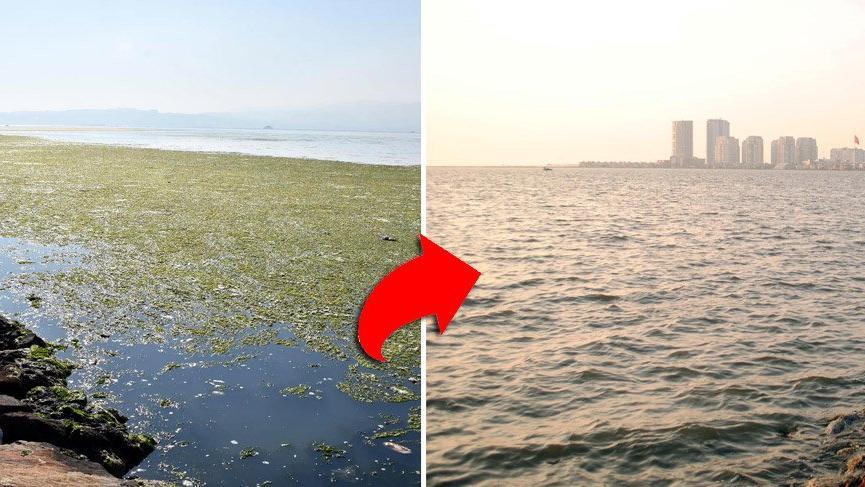 İzmir Körfezi yosunlardan temizlendi