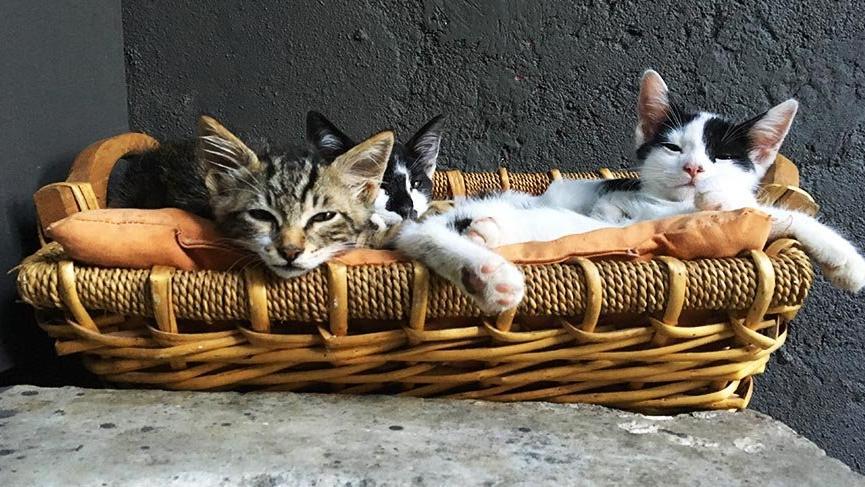 En çok alışveriş kediler için yapılıyor