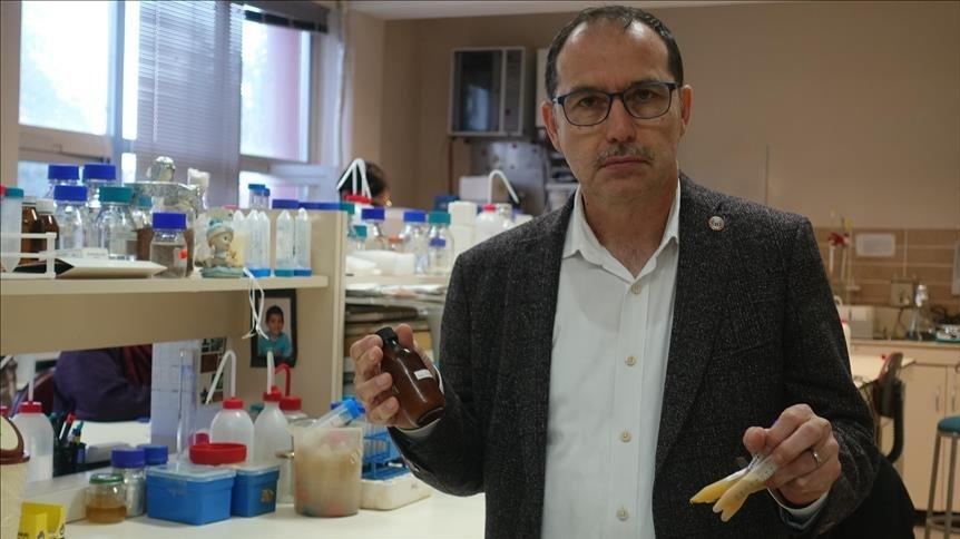 AIDS tedavisinde 'propolis' umudu