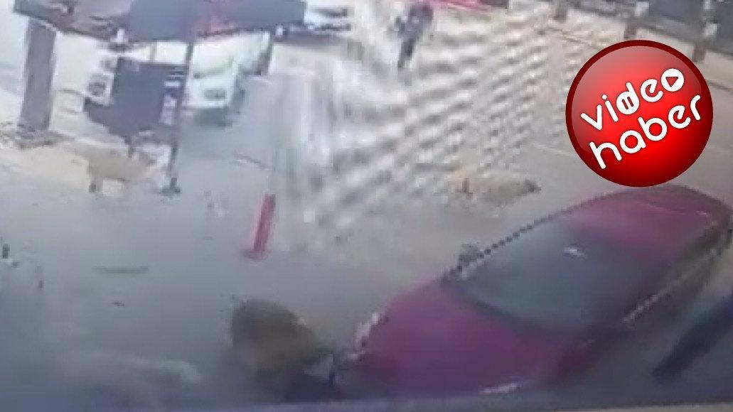 Otomobil altında kalan köpeği sokak köpeklerinin kurtardığı anlar kamerada