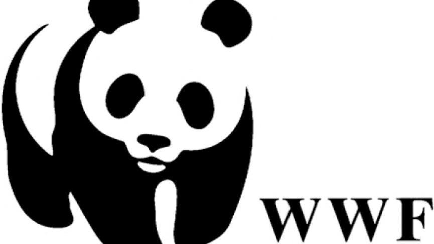 22 Kasım Hadi ipucu sorusu: WWF logosundaki soyu tükenme tehlikesinde olan hayvan nedir?